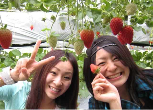 1-Day Fuji, Strawberry picking, Katsunuma wine tasting & Fuji lava plate BBQ lunch Strawberry Picking-3